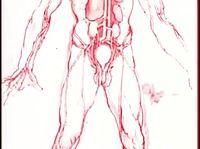 O Coração Humano   O Corpo Humano.mp4